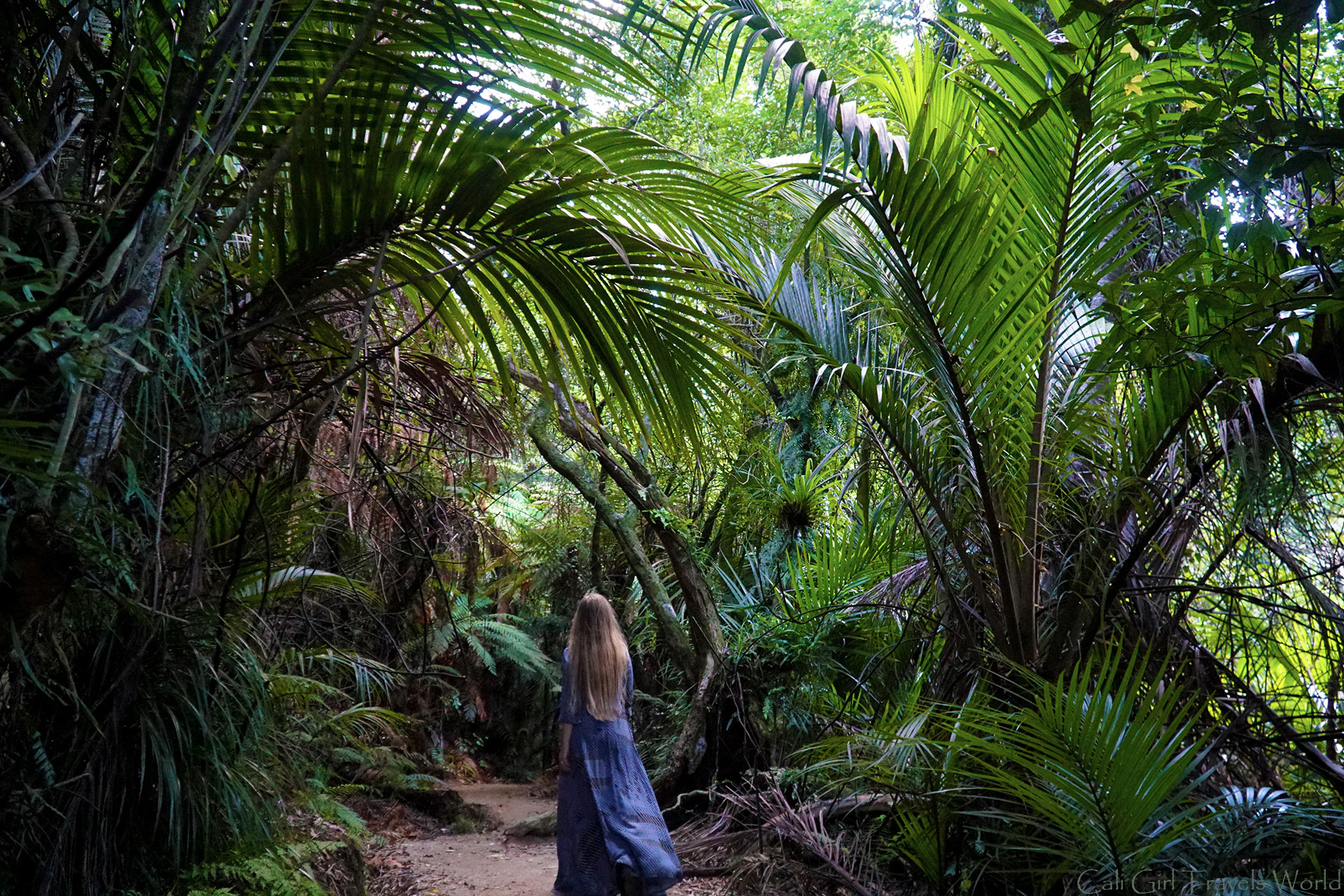 Female travel blogger walks through heavy bush on the Wainui Waterfall Hike in the north of the South Island of New Zealand.