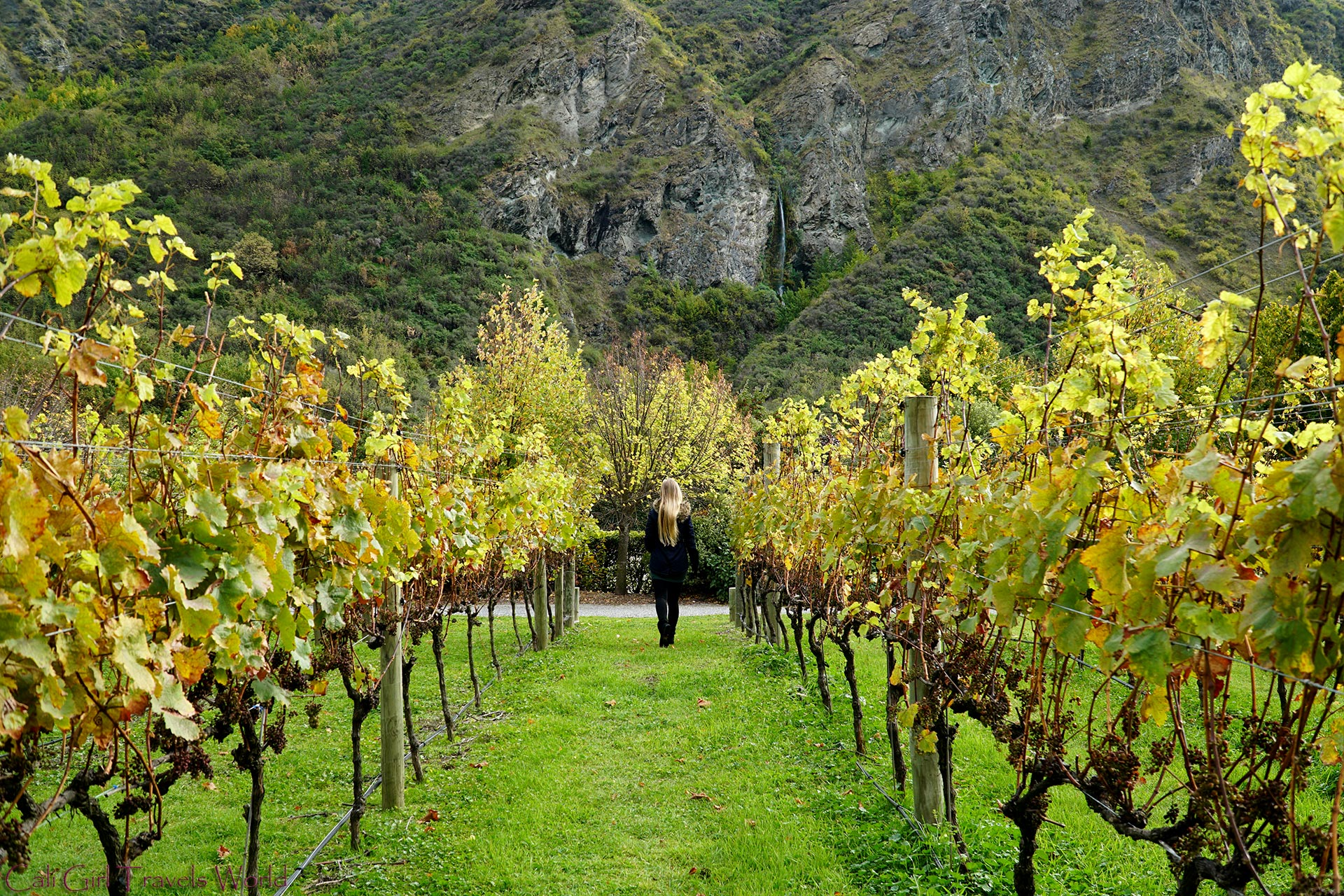 Blonde Female Traveler walking through a vineyard in Otago wine region on the South Island with a waterfall in the background.