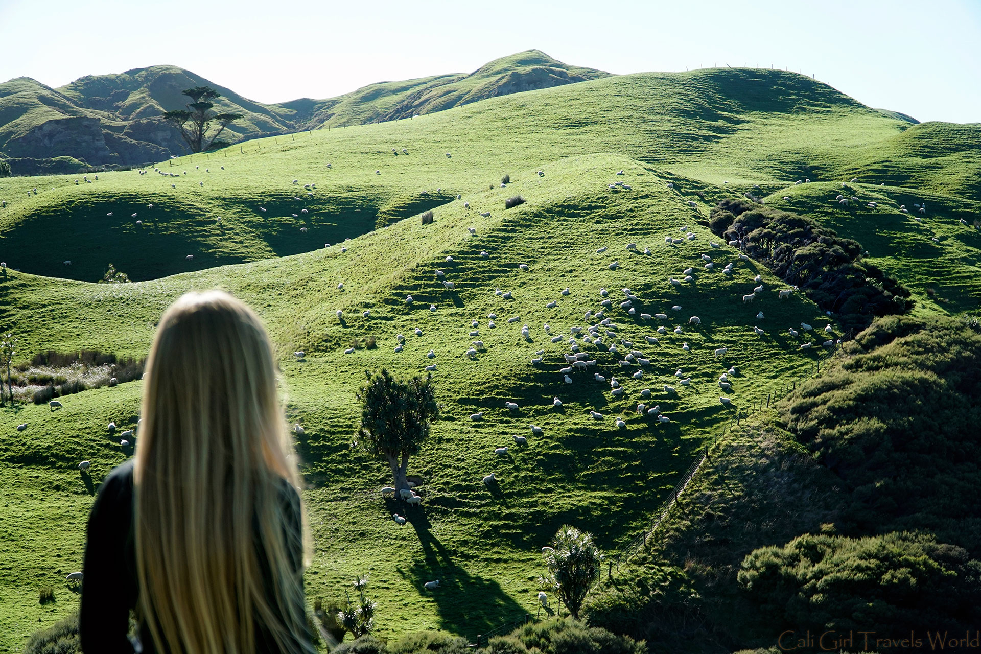 Female travel blogger looking out to green rolling hills covered with sheep in Northland, New Zealand.