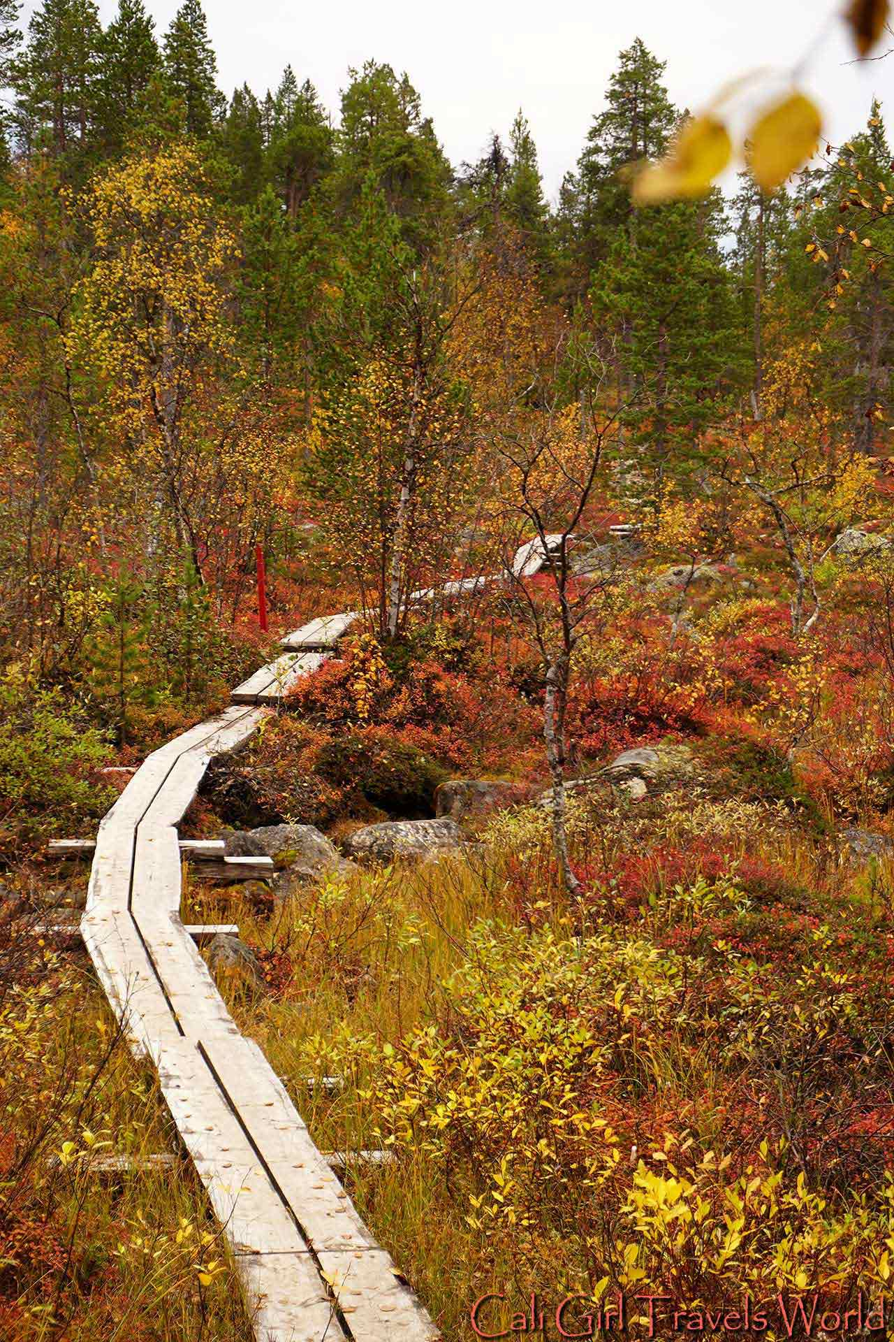 A continuation of a pathway leading into a forest in Lapland surrounded by autumn colors.