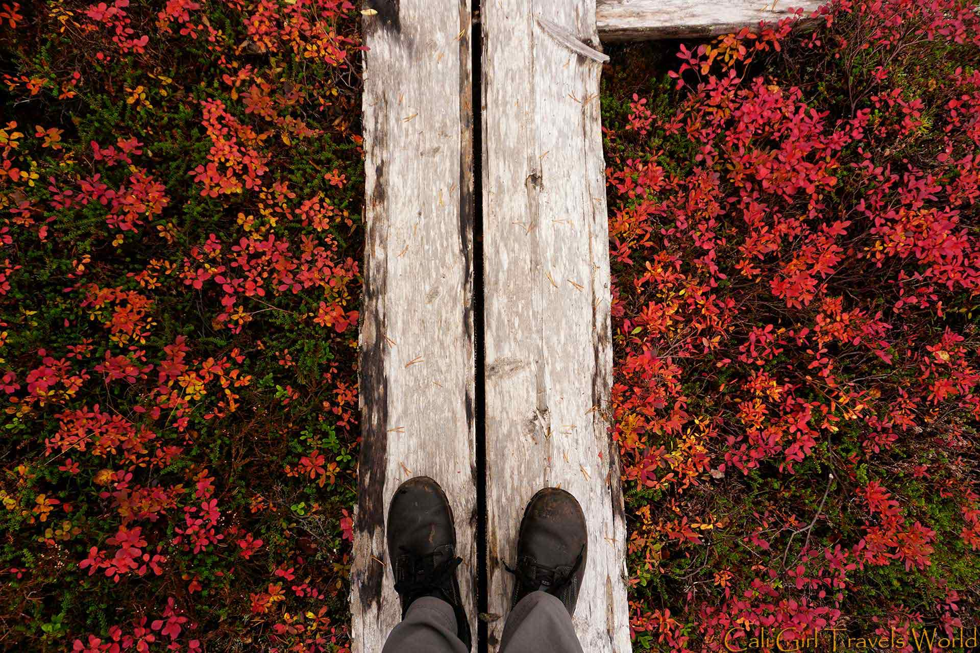Cali Girl Travels World Boots on a white pathway above hundreds of yellow and red autumn leaves in Inari, Finland.