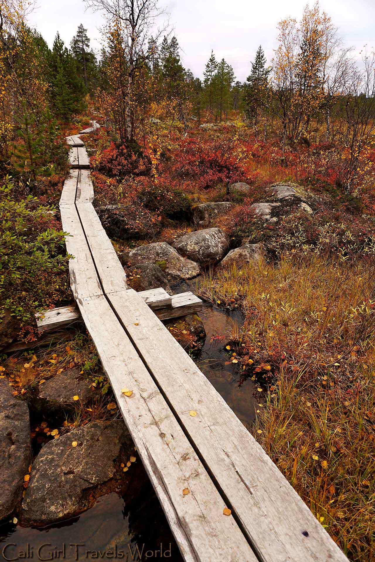 A pathway through the Finnish wilderness above puddles surrounded by ruska colors.
