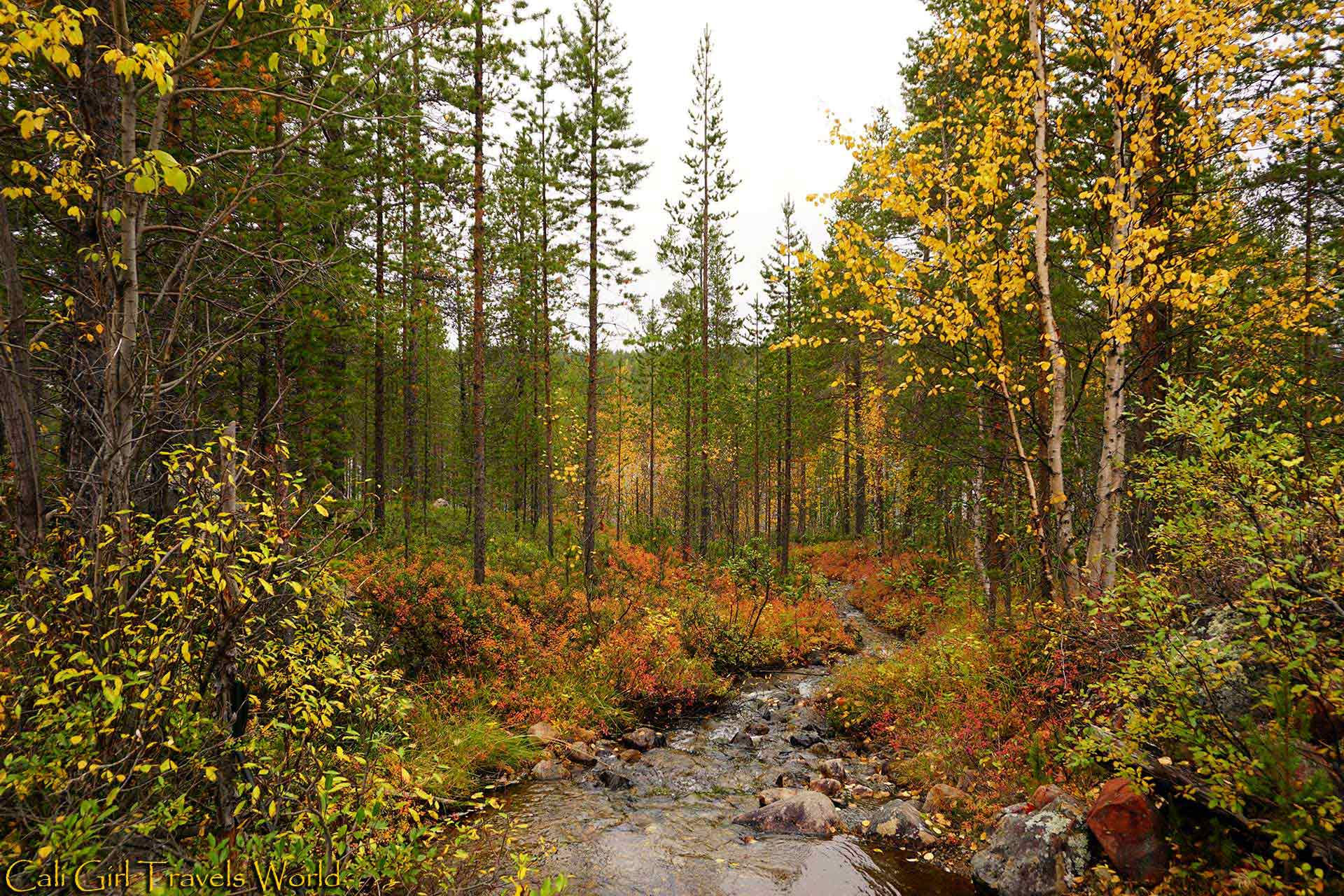 Stream coming off from a lake in Inari, Finland surrounded by ruska colors of yellow and red.