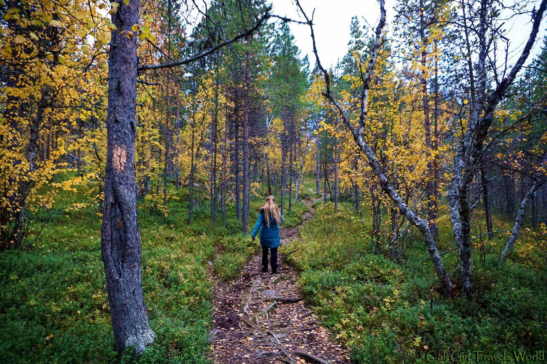 Cali Girl Travels World walking along a pathway in Inari, Finland through a forest of yellow leafed trees.