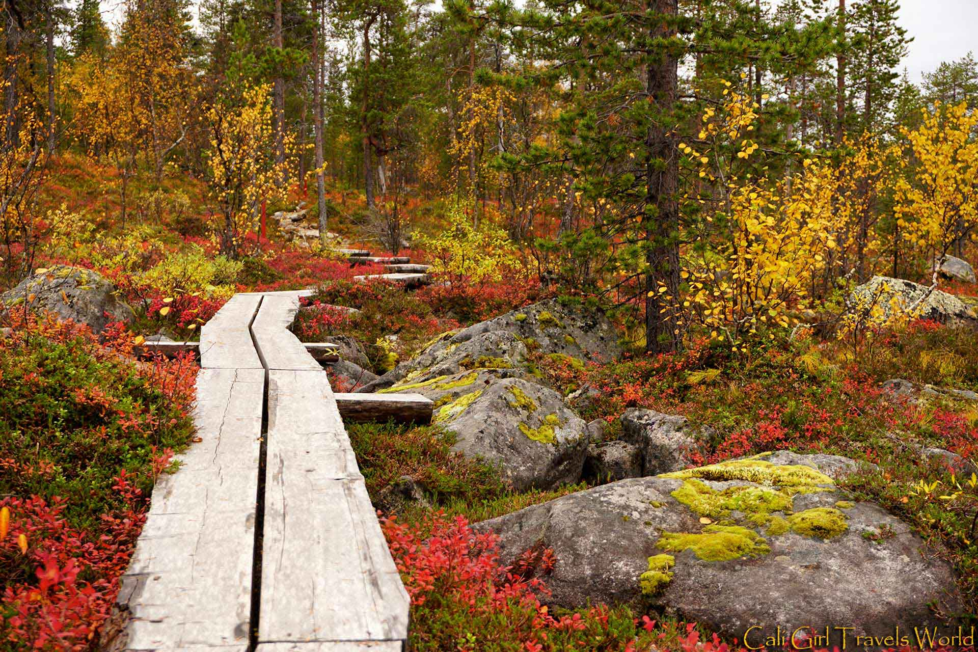 A board path deep in the forest of Lapland, Finland surrounded by autumn colors of yellow, red, and green.