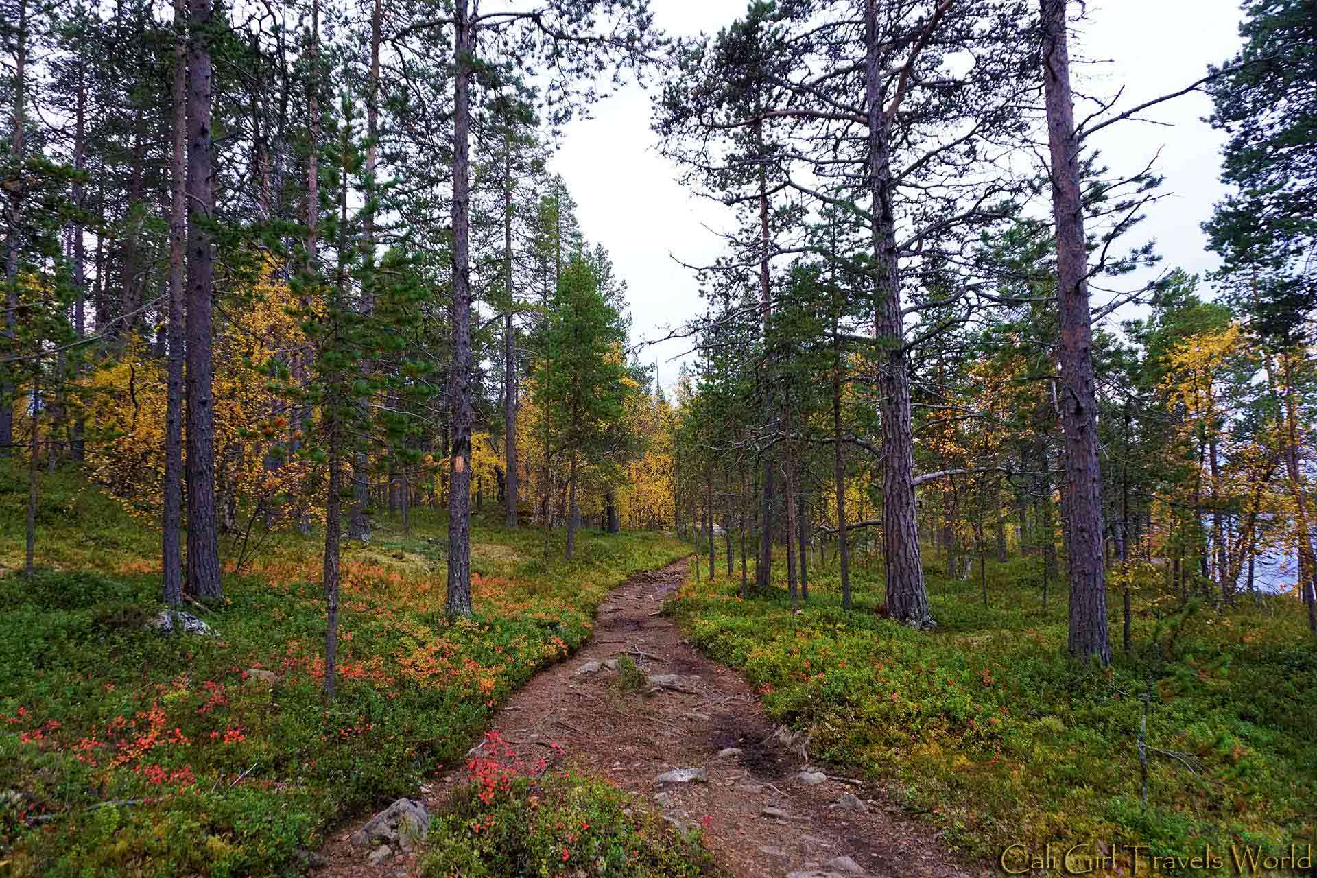 A path through the forest in autumn in Inari, Finland.