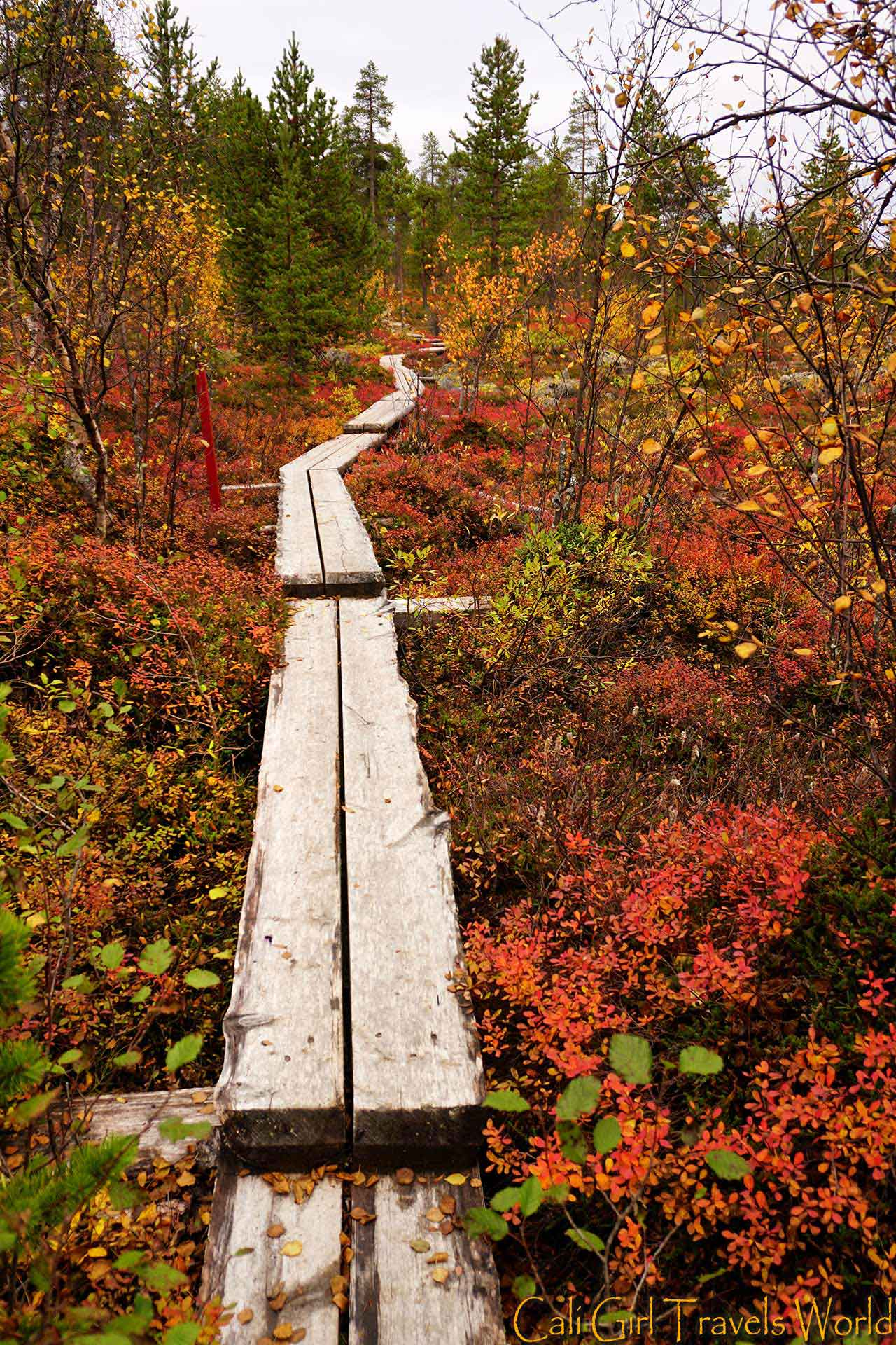 A nature path surrounded by red, yellow, and green fall leaves and trees.